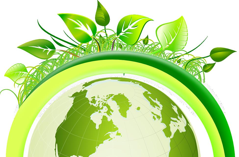 going_green_classroom_study